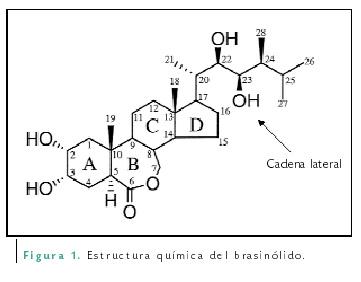 Los Brasinoesteroides Una Nueva Clase De Hormonas Vegetales